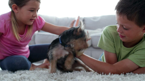 Siblings Playing With Puppy And Bone With Their Mo stock footage