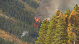HD2009-9-40-14 Forest Fire Audio Chatter stock footage