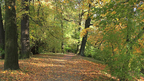 Autumn Path stock footage