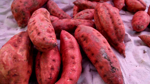 Healthy Sweet Potato Root Crop stock footage