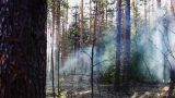 4313 Forest Smoke HD stock footage