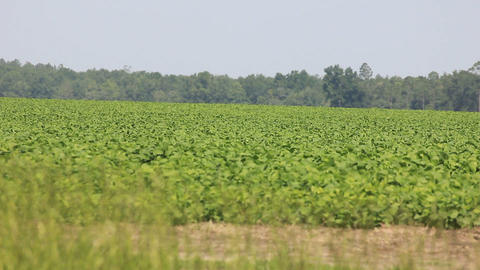 Vast Agriculture Field stock footage