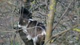 Cats Sitting On A Tree 3 stock footage