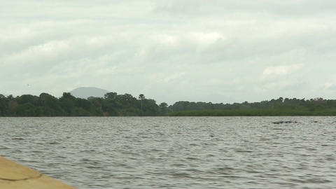 Malawi: birds flying above the lake Footage