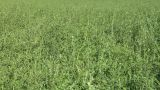 Field Grass Texture 01 stock footage