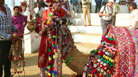 Decorate Camel stock footage