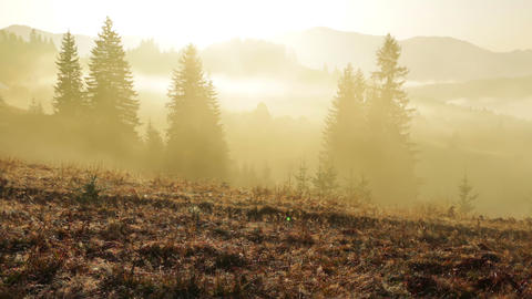 Yellow Fog In The Wooded Mountains stock footage