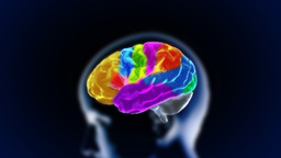 Brain Head Various Section stock footage