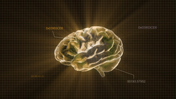 Gold Brain With Code stock footage