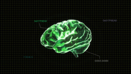 green brain with code Animation