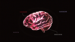 Red Brain With Code stock footage