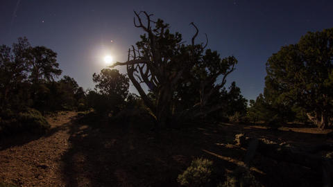 Wide Shot Of Moonrise With Moving Shadow Of Trees stock footage