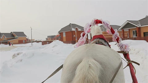 Riding In A Sleigh, Rear View Of A Horse, Tail stock footage