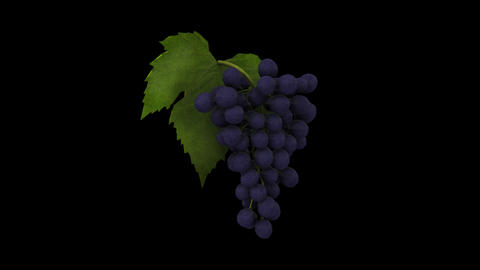 Grapes Animation stock footage