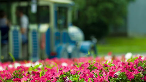 The Tourist Bus Goes On The Road With Flowers stock footage