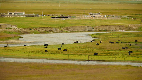 4k a flock of yak on the Prairie,River flowing through the tibet grassland Footage