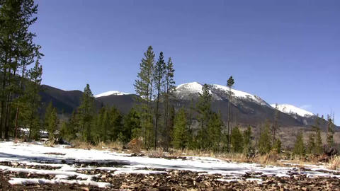 (Seamless Loop) Windy Sunny Mountain Trees. Profes stock footage
