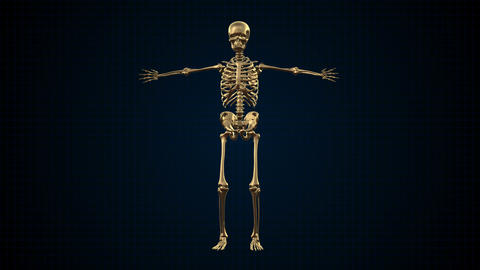 3D Animation Of Human Skeleton Gold stock footage