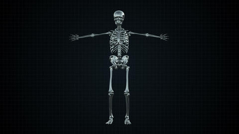 3D Animation of Human Skeleton Silver Footage