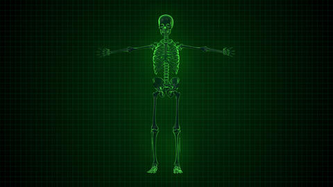 3D Animation Of Human Skeleton X Ray Green Interfa stock footage