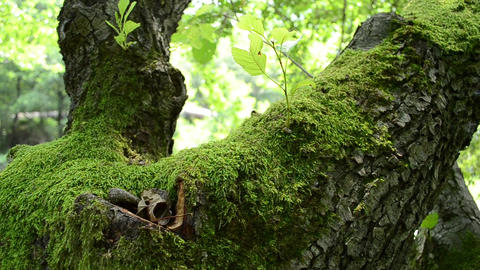 Green Moss On Tree stock footage