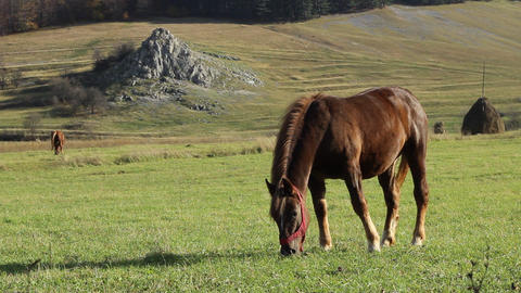 Sunny Afternoon Grazing Horse stock footage