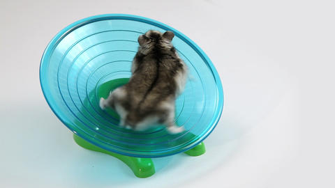Hamster exercise wheel Footage