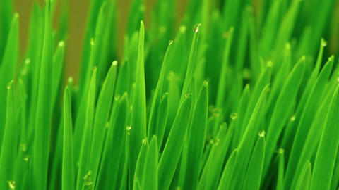 Fresh Green Grass With Raindrops stock footage