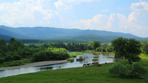 Landscape With River Between Mountains And Horses - Timelapse stock footage