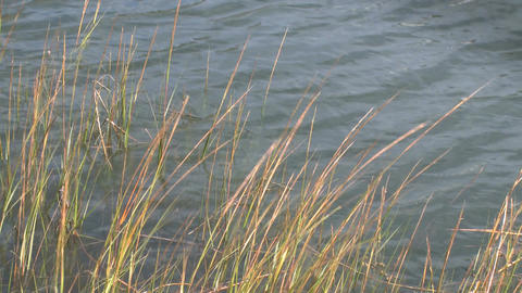 Sea Grass Waves Water stock footage