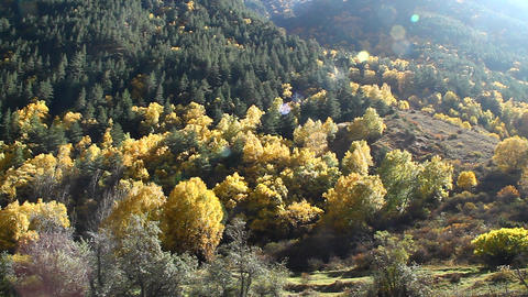 Beautiful Autumn Landscape With Golden Trees And The Mountains, Shooting Against stock footage