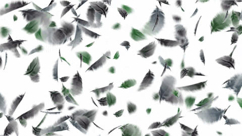 bird feathers falling.feathers fossil,plastic,duck,velvet,wool,bird flu,poultry,chickens,ducks,geese Animation