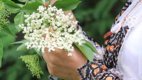 Woman With A Elderberry Flower In Hand 02 stock footage