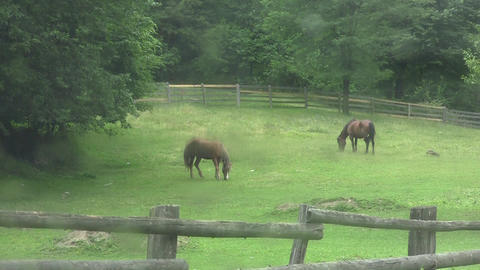 Brown Horses To Pasture 04 stock footage