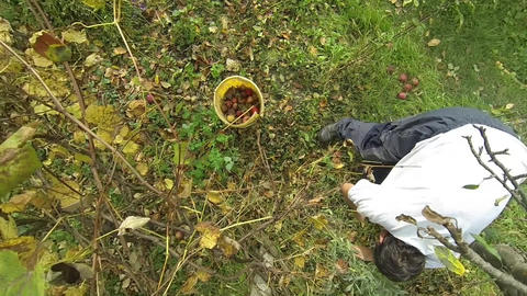 Picking Apples 01 (2) stock footage