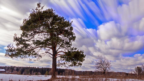 Pine against the sky. Blurry. Time Lapse Footage