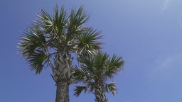 Palm Trees On A Beautiful Sunny Day (1 Of 2) stock footage