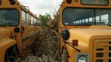 Schoolbus Pan stock footage