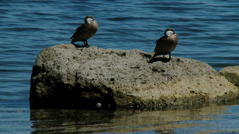 Birds On The Sea stock footage