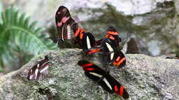 Butterfly Lunch stock footage