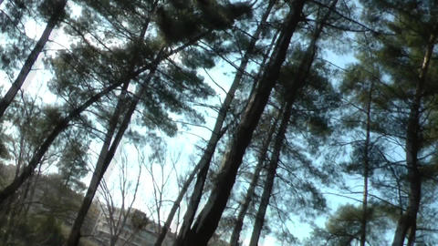 Feeling dizzy in the woods Footage