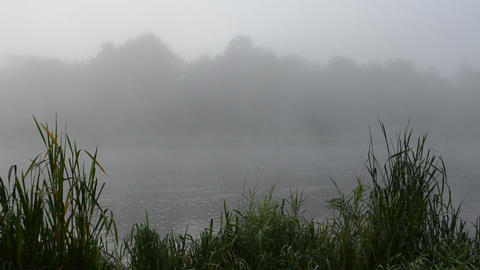 early morning river water flow misty fog shore green flora reeds Footage