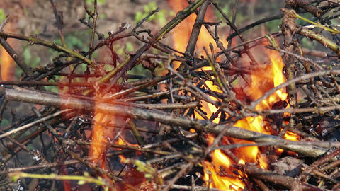 4K Burning Leaves And Garden Waste In Late Autumn 6 Closeup stock footage
