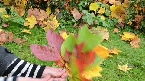 Hand Pick Various Color Form Tree Leaves. Cute Autumn Bunch stock footage