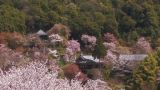 Spring landscape in Mt.Yoshino,Nara,Japan_2 Footage