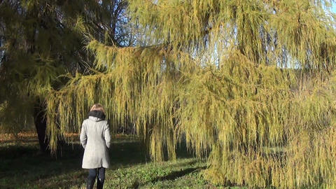 girl walks in park the majestic larch hide among the branches Footage