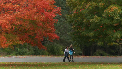 Enjoying The Colors Of The Season (4 Of 5) stock footage