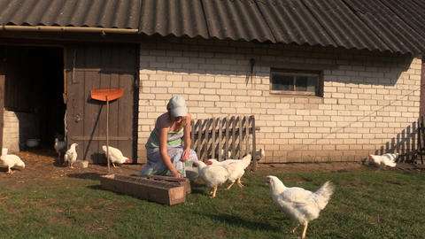 Woman Feed Poultry Broiler Chicken In Farm Stall Outdoor stock footage