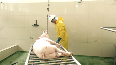 Pig carcass being hoisted to the line in authentic butchery shop Footage