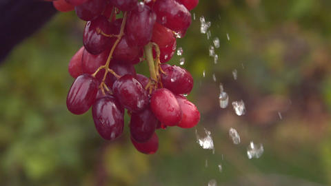 Bunch Of Red Grapes Watered In Slow Motion stock footage
